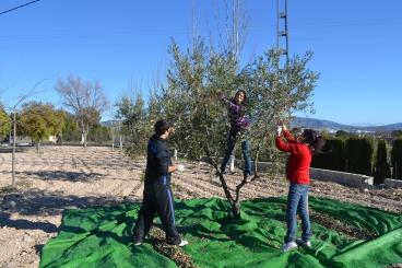Fent olives